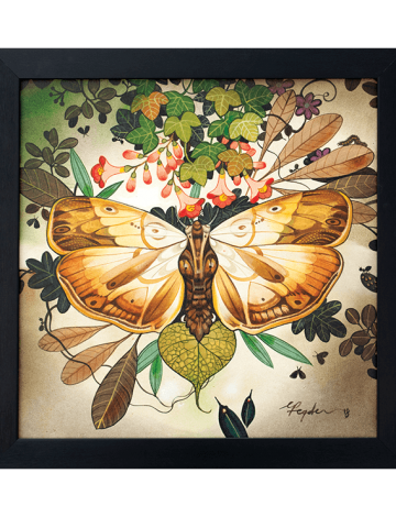 Moth Mirror