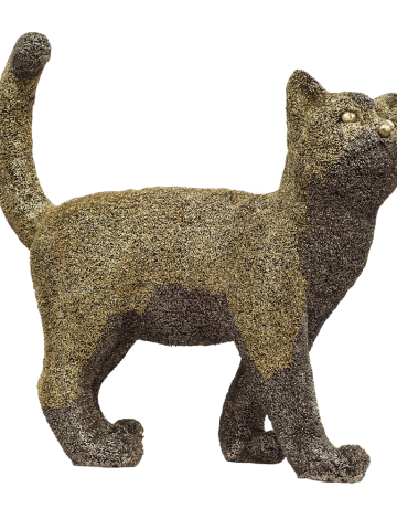 CAT – AS – TROPHY 2
